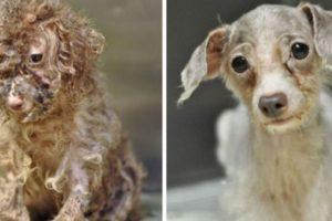 8. Antes y después Foto:Imgur. Imagen Por: