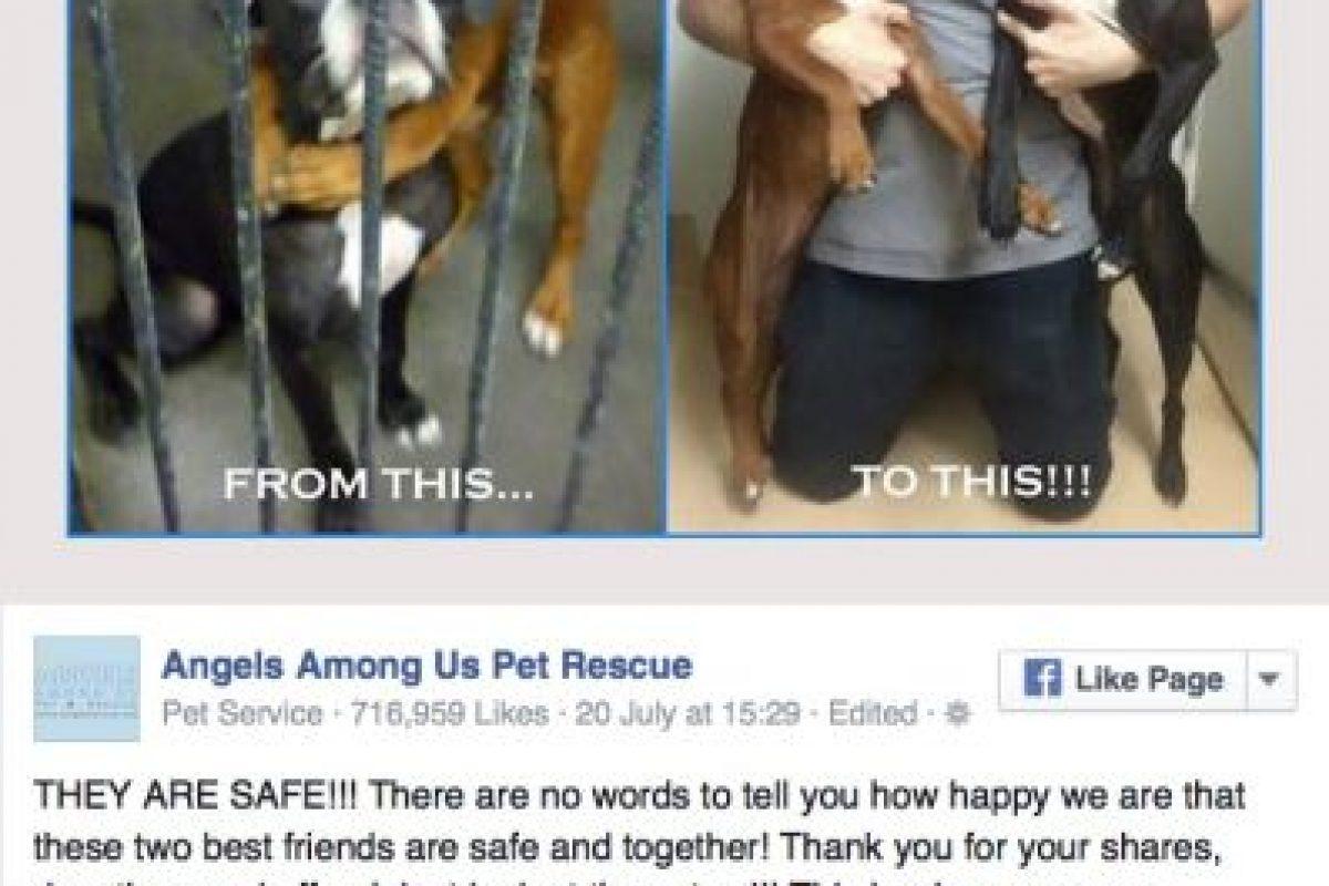 Después de ser rescatadas Foto:Vïa FAcebook/angelsrescue?fref=nf. Imagen Por: