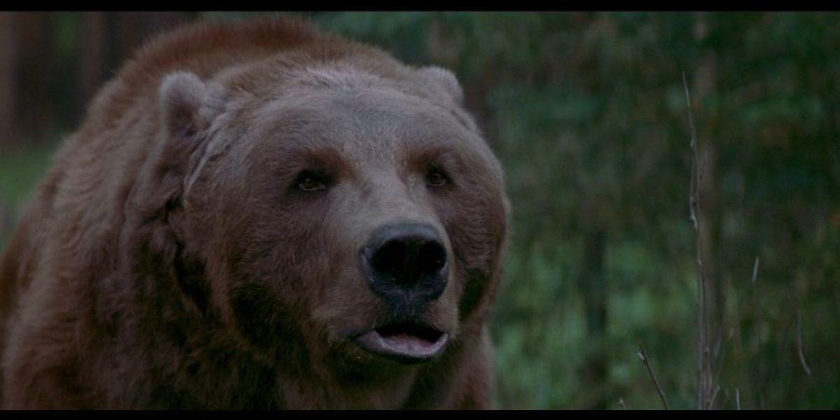 Por temor a osos hambrientos, policía de Siberia recomienda evitar cementerios