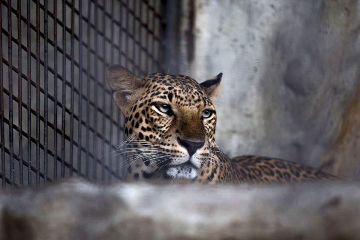 No se sabe si el animal salió con vida. Foto:Getty Images. Imagen Por: