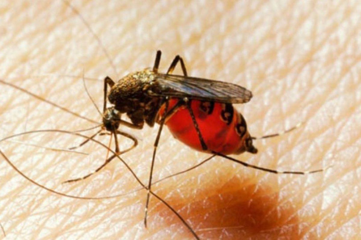 Ya que la sudoración y los olores fuertes invitan a estos insectos a picarnos. Foto:Pixabay. Imagen Por: