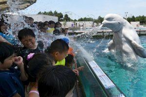 Una ballena rocía a los visitantes de un parque en Tokio. Foto:AFP. Imagen Por: