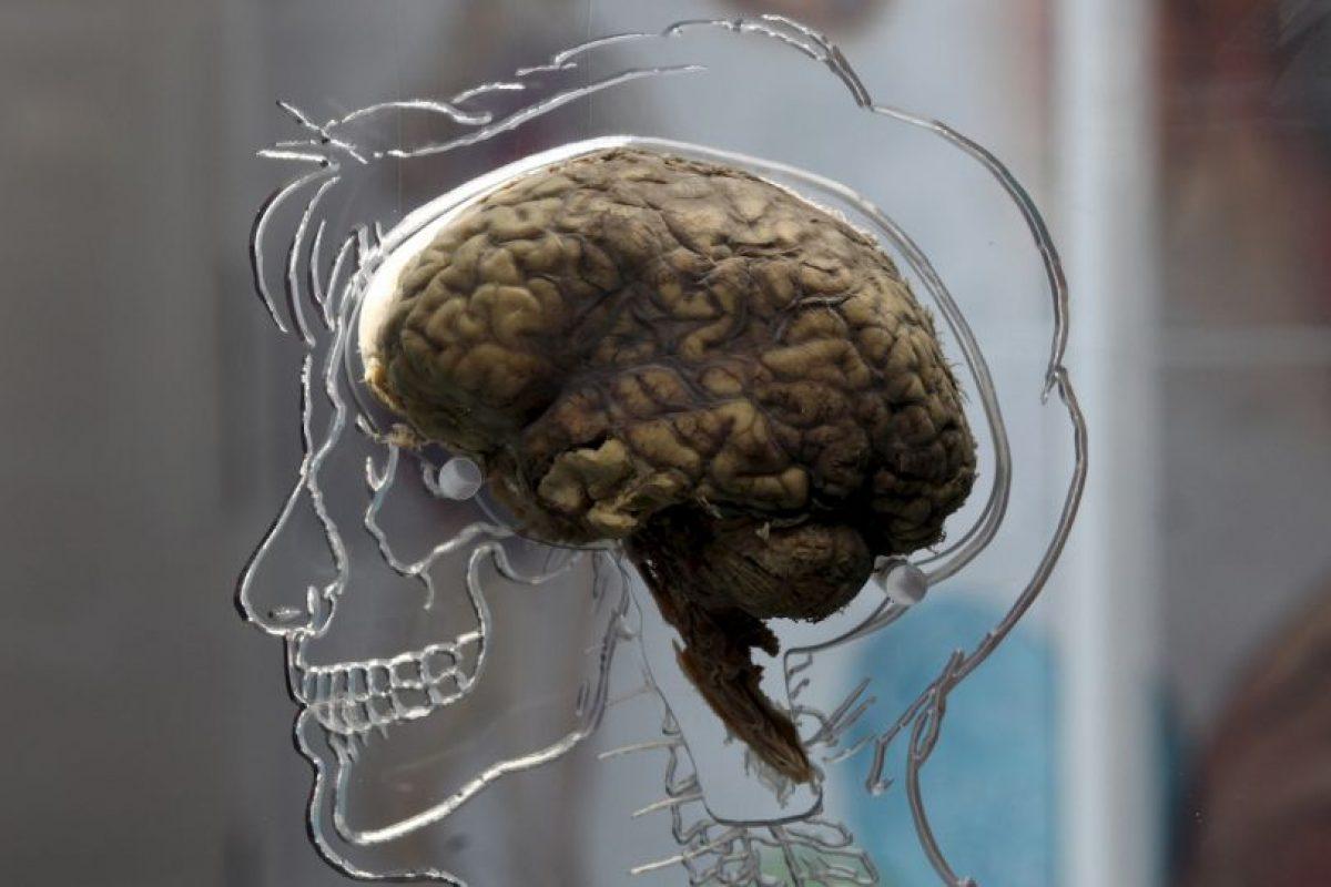 Según sus usuarios, ayudan a que la gente mantener la concentración, mejora su memoria e incrementa su creatividad. Foto:Getty Images. Imagen Por:
