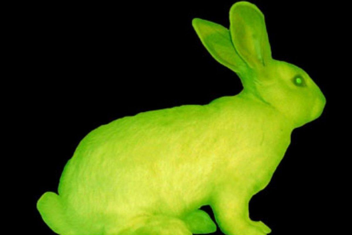 En la Universidad de Hawai, los científicos pusieron a varios conejos fluorescentes. Foto:vía Universidad de Hawai. Imagen Por: