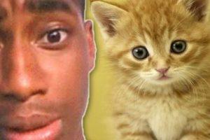 """Pateó a su pequeño gatito: Walter Easley se ganó el odio de Internet cuando tuvo la """"brillante idea"""" de grabarse a sí mismo pateando a su gatito. Inicialmente se burló de los comentarios de odio en Twitter diciendo: """"lol, ahora tengo algo con lo qué reírme todo el día"""". Pero el video se volvió viral y a él lo arrestaron. Tuvo que pasar 60 días en prisión. El gatito no sufrió ningún daño, pero a su dueño le quitaron la custodia. Foto:vía Oddee. Imagen Por:"""