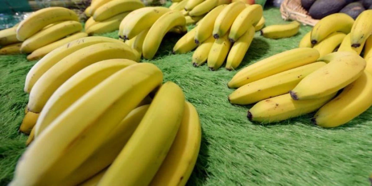 Extraño virus podría dejar al mundo sin plátanos