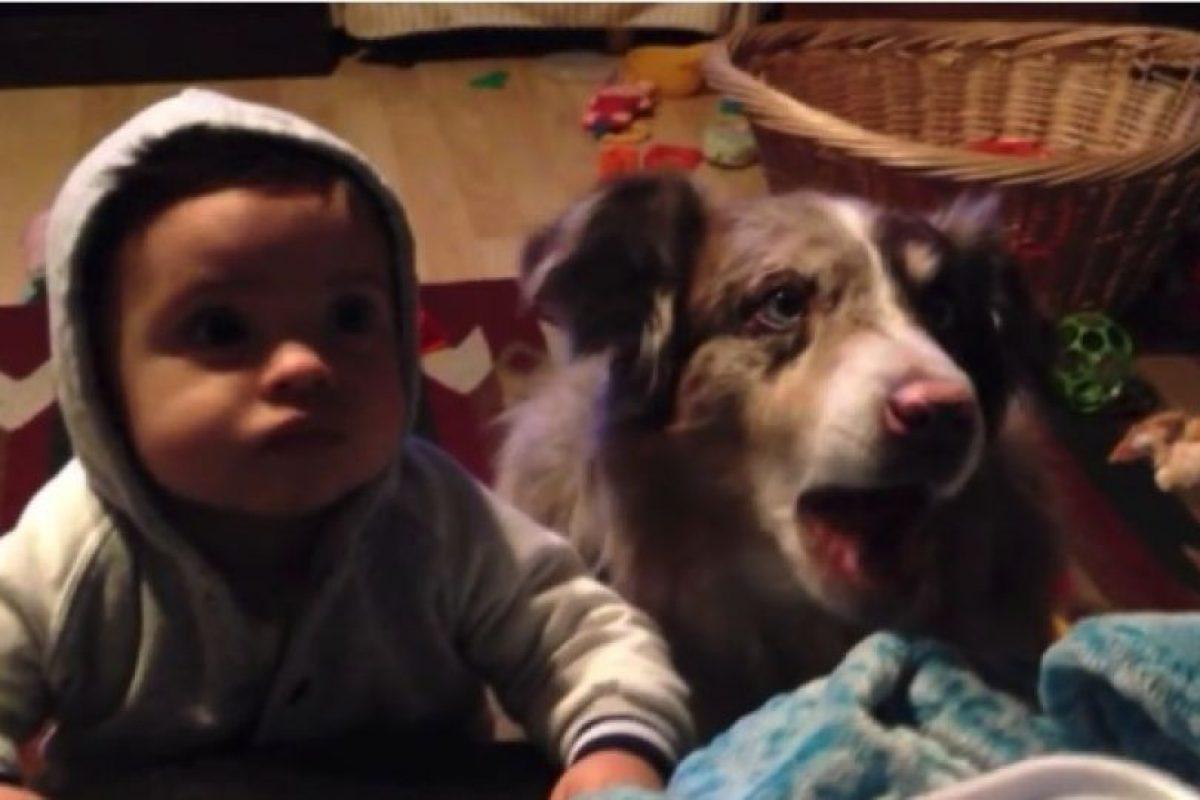 """2. Este perro pudo decir """"mamá"""" antes que el hijo de su dueña Foto:Vía Youtube/Sam Giovannni. Imagen Por:"""