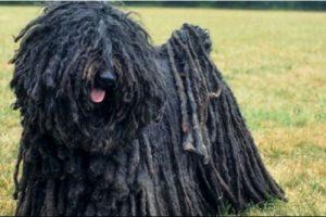 Un granjero en China tenía dos mascotas que pensaba era perros Foto:Wikimedia.org. Imagen Por: