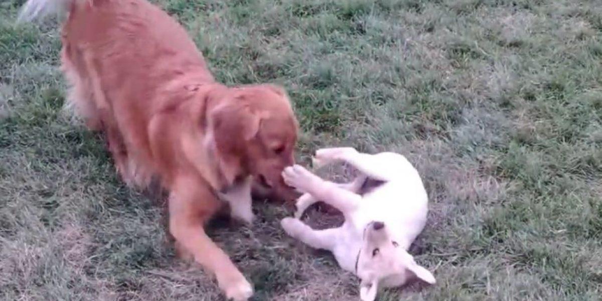 VIDEO: Este perro no pudo disimular la emoción de ver a su nuevo amigo