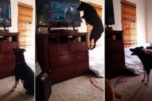 A este perro le encanta saltar Foto:Vía Youtube. Imagen Por: