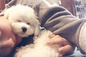 Aunque se desconoce la forma en que murió la mascoda de la cantante, Demi se limitó a decir que fue en un trágico accidente. Foto:Instagram/DemiLovato. Imagen Por: