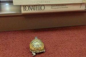 ¿Será Donatello? Foto:Reddit. Imagen Por: