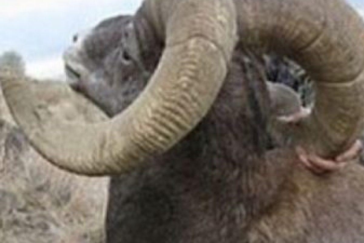 No por solo Cecil, sino por los otros animales que mató. Foto:vía Facebook/TrophHunters. Imagen Por: