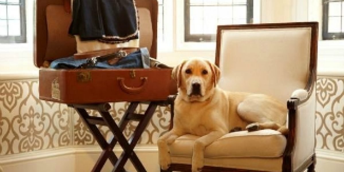Cinco hoteles top para mascotas y sus amos
