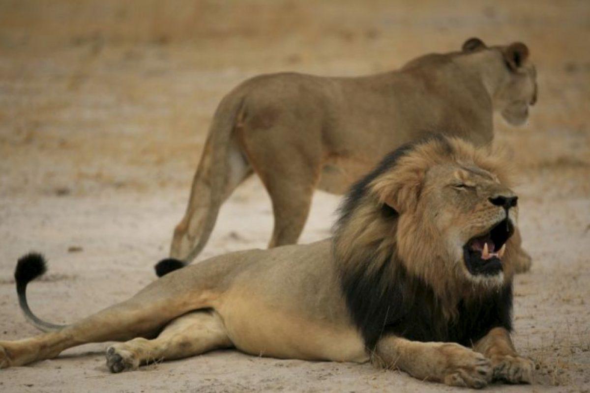 Este fue despellejado y decapitado. Foto:vía Getty Images. Imagen Por: