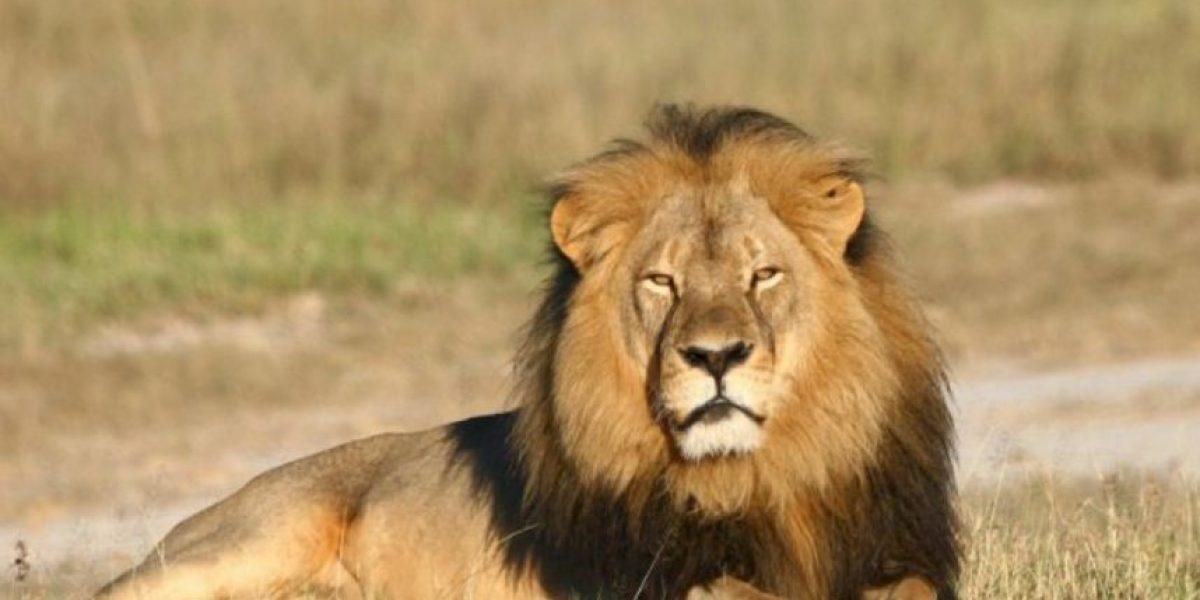 Walter Palmer, asesino del león Cecil,  acosó sexualmente a una empleada