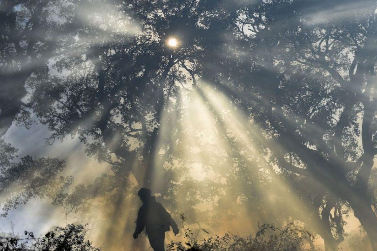 Incendio forestal en España. Foto:AFP. Imagen Por: