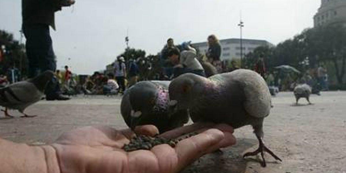 Prohibido alimentar palomas bajo pena de multa en Perú