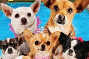 """Beverly Hills Chihuahua 3: ¡Viva la Fiesta!"". Disponible a partir del 1 de agosto. Foto:Walt Disney Studios Home Entertainment. Imagen Por:"