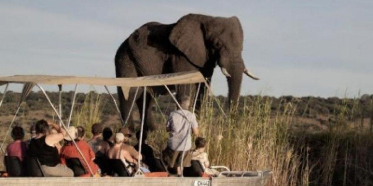 ONU aprueba una resolución contra la caza furtiva de especies amenazadas
