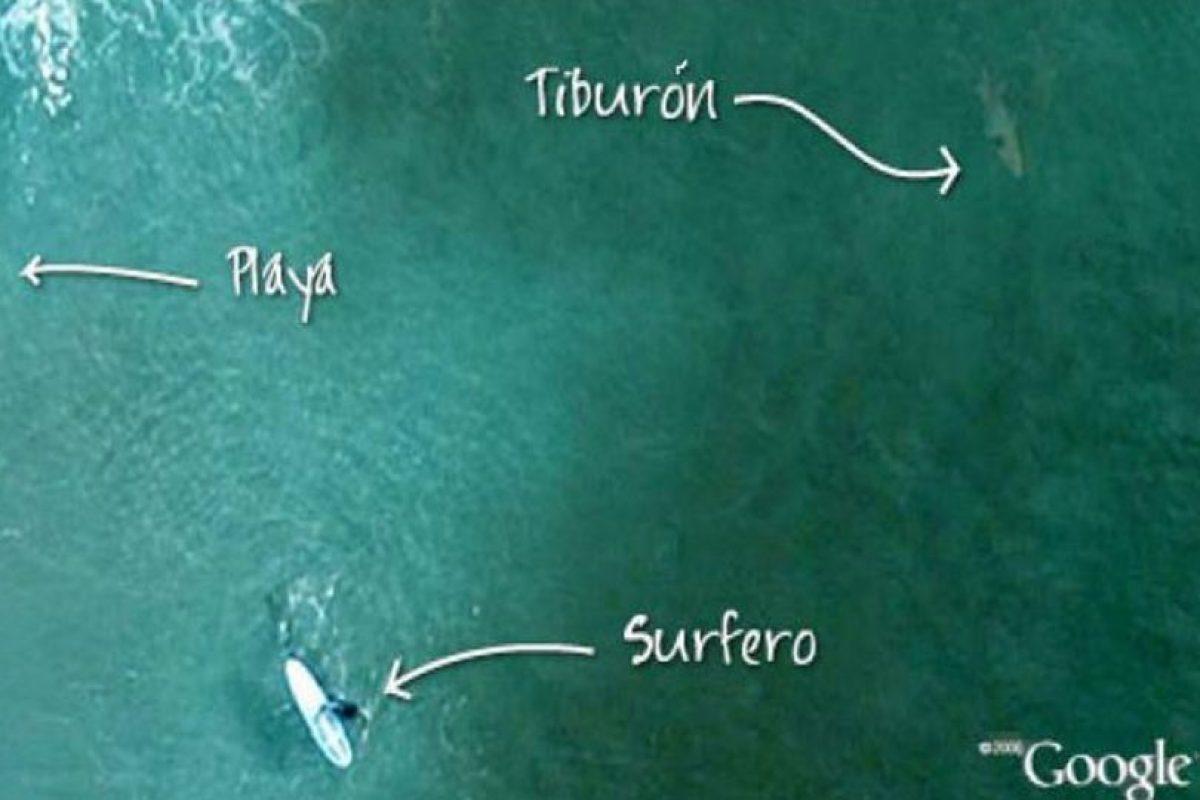 """En las playas de Manly, Australia, mucha gente suele ir a """"surfear"""" y tomar el sol. Sin embargo, ¿estarán conscientes de los animales que habitan cerca de ahí? Foto:Google. Imagen Por:"""