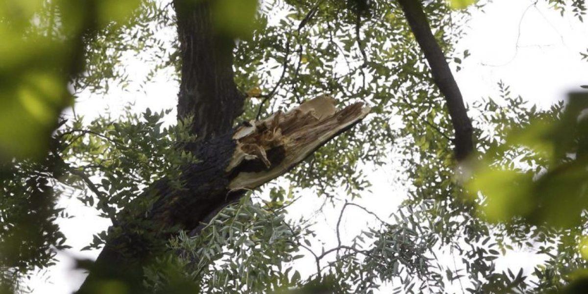 Dos menores fallecen al caerles una rama en el parque de Yosemite