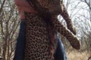 Él ya ha matado otros animales. Foto:vía Twitter. Imagen Por: