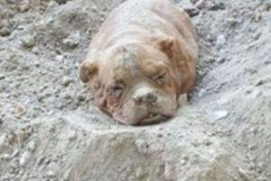 Esta perra fue enterrada viva por su dueño en Francia. Foto:vía Facebook/Pedro Dinis. Imagen Por: