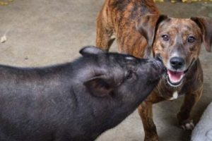 Foto:Dogguienet. Imagen Por: