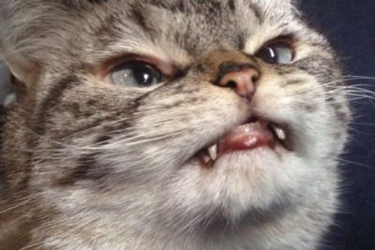 "Loki Kitten es un ""demoniaco"" gato que conquista Internet. Foto:Vía Instagram/@loki_kitteh. Imagen Por:"