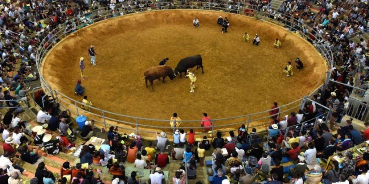 En Japón las corridas de toros se hacen sin torero