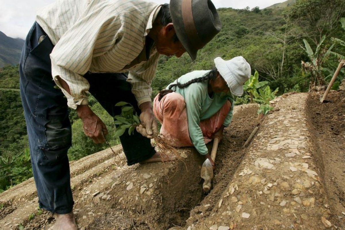 1. Trabajo en granjas orgánicas. Foto:Getty Images. Imagen Por: