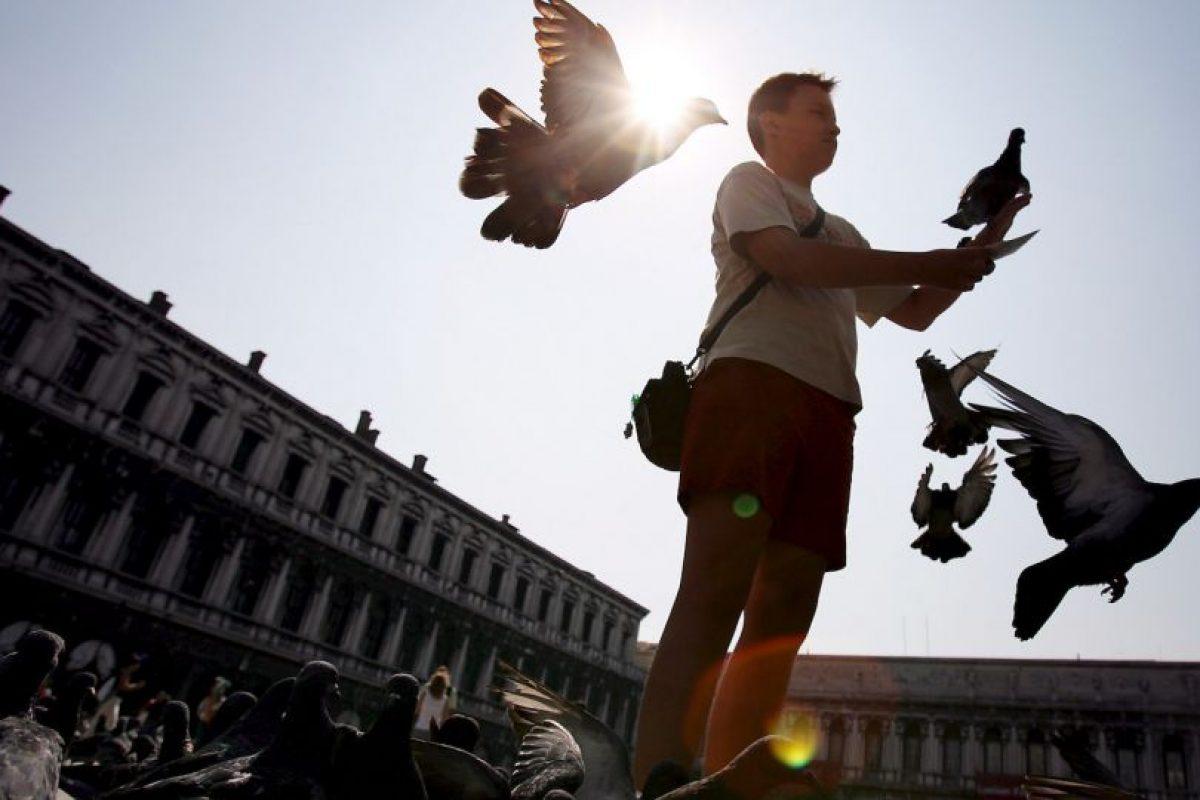 3. Palomas Foto:Getty Images. Imagen Por: