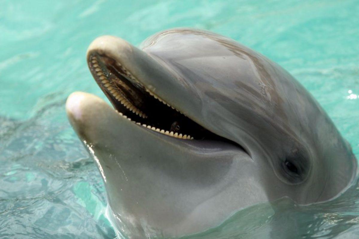 2. Delfines Foto:Getty Images. Imagen Por: