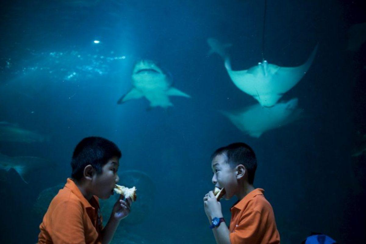 Dos niños comiendo en un acuario en China. Foto:AFP. Imagen Por: