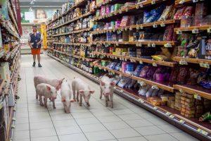 Cerdos liberados en un supermercado como parte de una protesta de agricultores en Foto:AFP. Imagen Por: