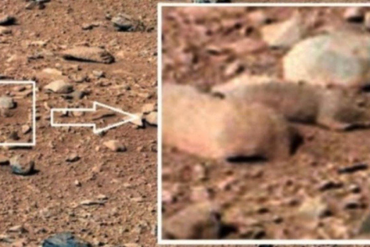 Una rata Foto:NASA. Imagen Por: