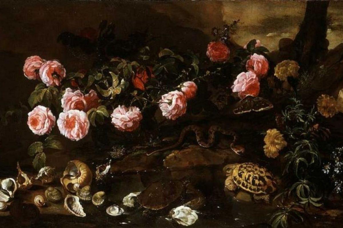 """""""Conchas y tortugas"""" Paolo Porpora Foto:Wikimedia. Imagen Por:"""