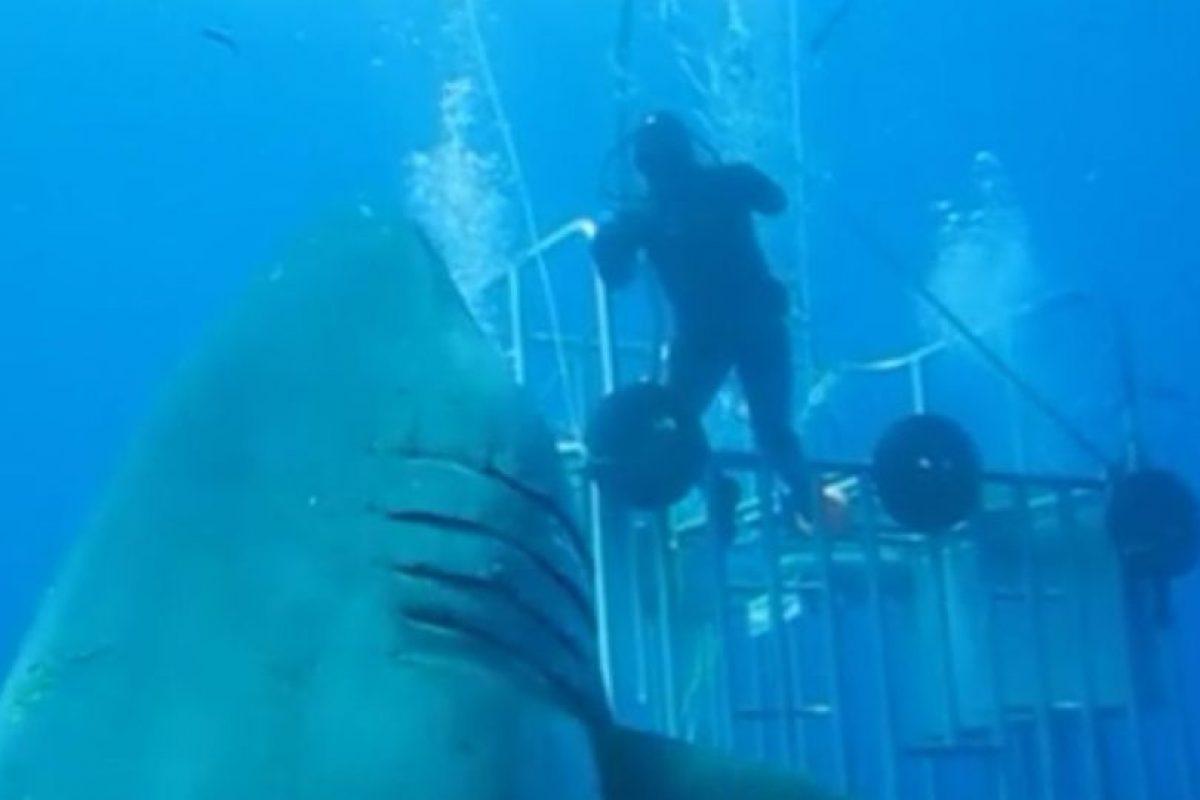 """El experto en tiburones de """"Discovery Channel"""", Mauricio Hoyos Padilla, subió el pasado 10 de agosto una inmersión realizada en 2013 en la isla de Guadalupe, en México, donde encontró lo que llamó """"el mayor tiburón blanco jamás grabado"""". Foto:Vía Facebook.com/amaukua. Imagen Por:"""