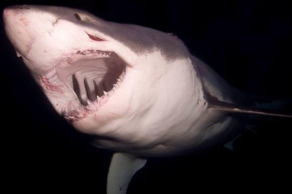 Aquí otro enorme tiburón captao por Mauricio Hoyos Foto:Vía Facebook.com/amaukua. Imagen Por: