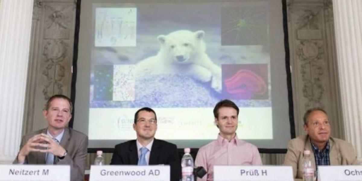 Resuelven misterio de la muerte del famoso oso polar