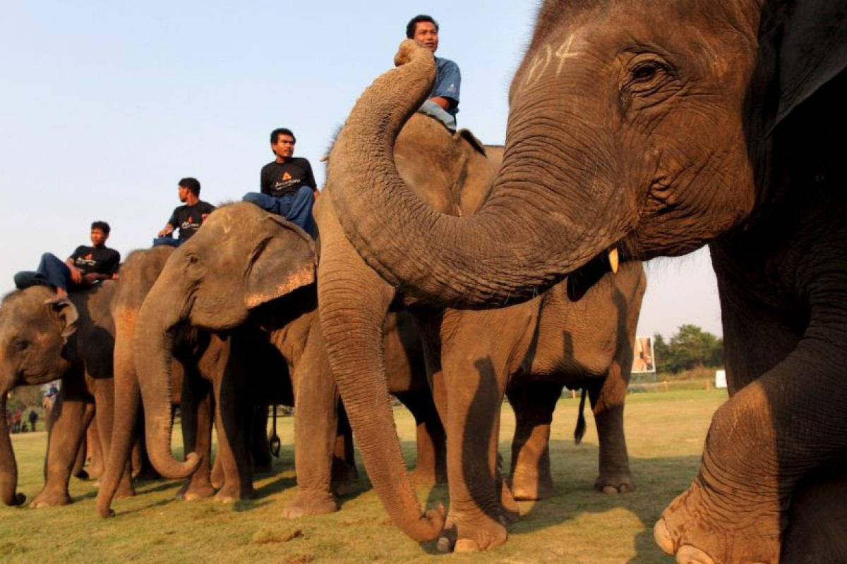 En Tailandia, el elefante es un animal muy valorado. Foto:Getty Images. Imagen Por: