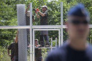 Construcción del muro entre Hungría y Serbia. Foto:Getty Images. Imagen Por: