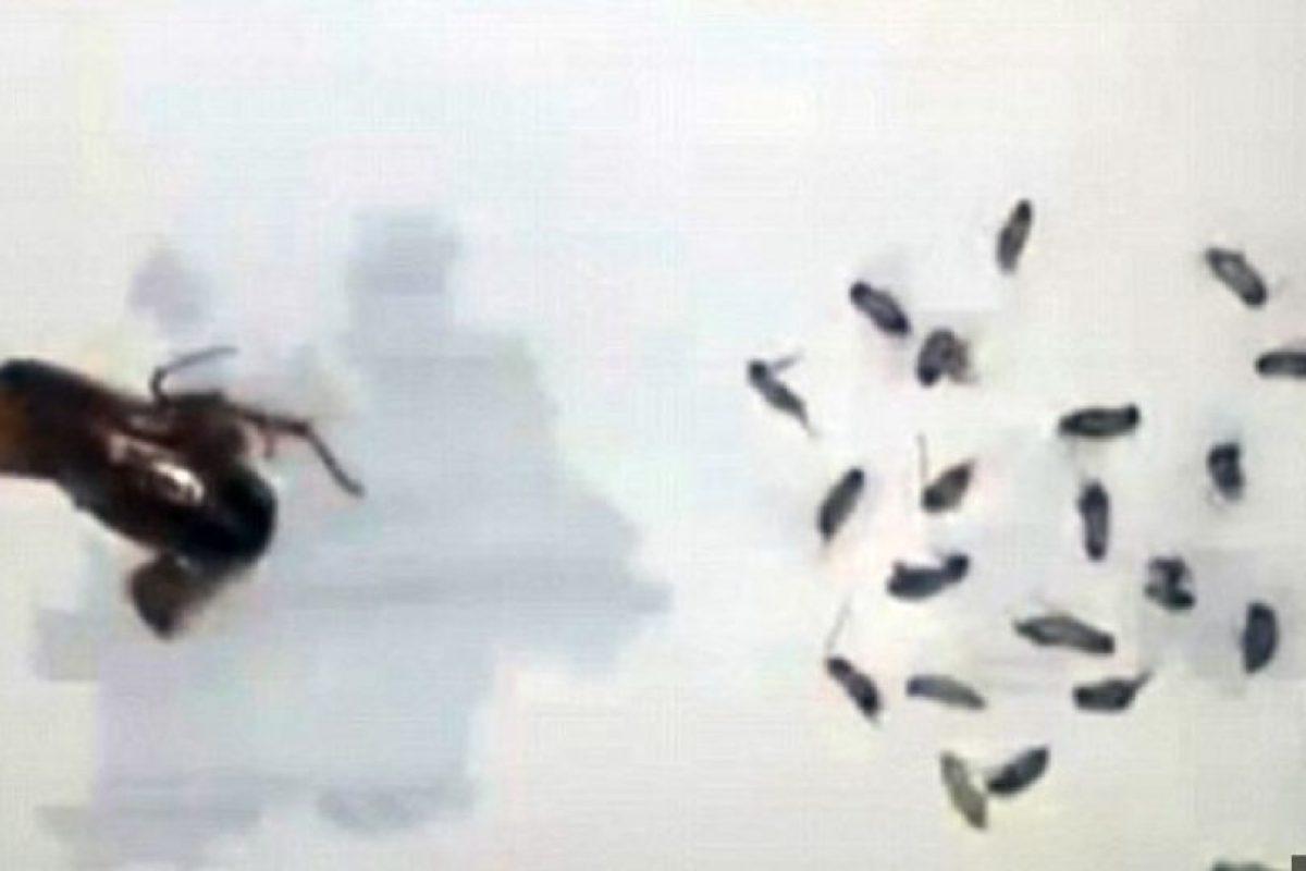 Estas fueron las cucarachas encontradas en el oído de Li. Foto:Vía TVS. Imagen Por:
