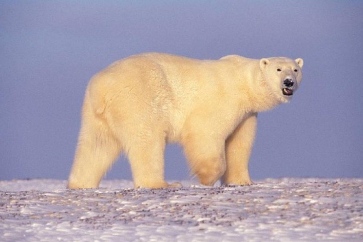 Mientras residen en estos sitios, no se encuentran en la naturaleza tratando de valerse por sí mismos. Foto:Wikimedia. Imagen Por: