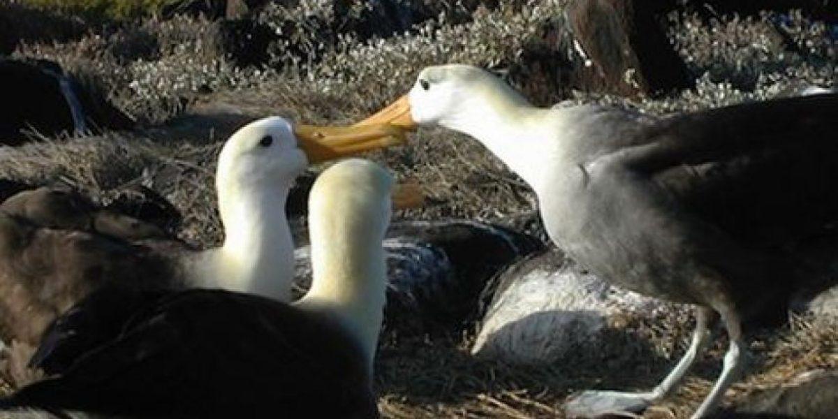 En 2050 casi todas las aves marinas habrán ingerido plástico