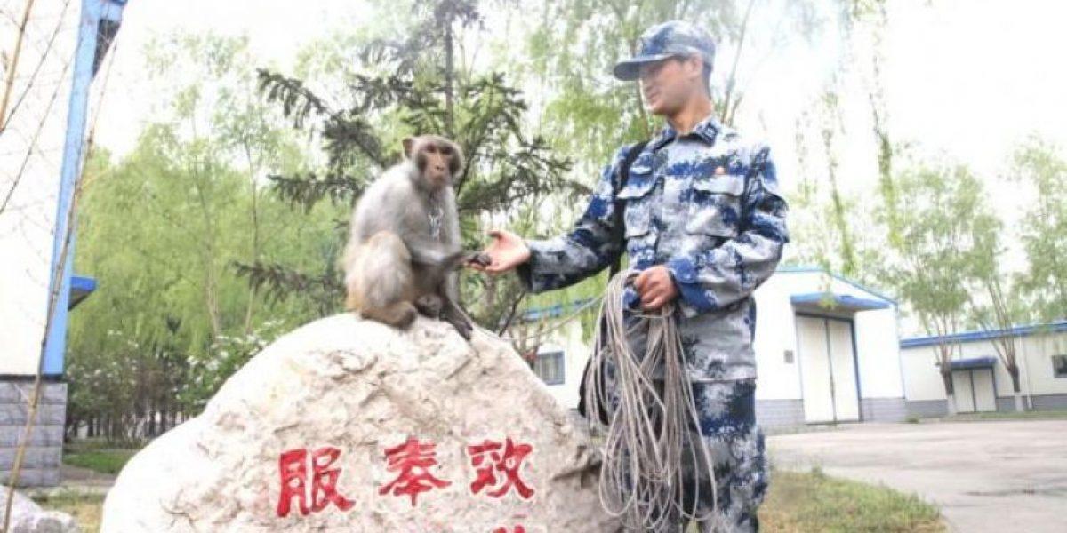 En China: monos y halcones para garantizar seguridad de desfile militar
