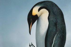"""""""La marcha de los pingüinos"""". Disponible a partir del 1 de septiembre. Foto:National Geographic. Imagen Por:"""