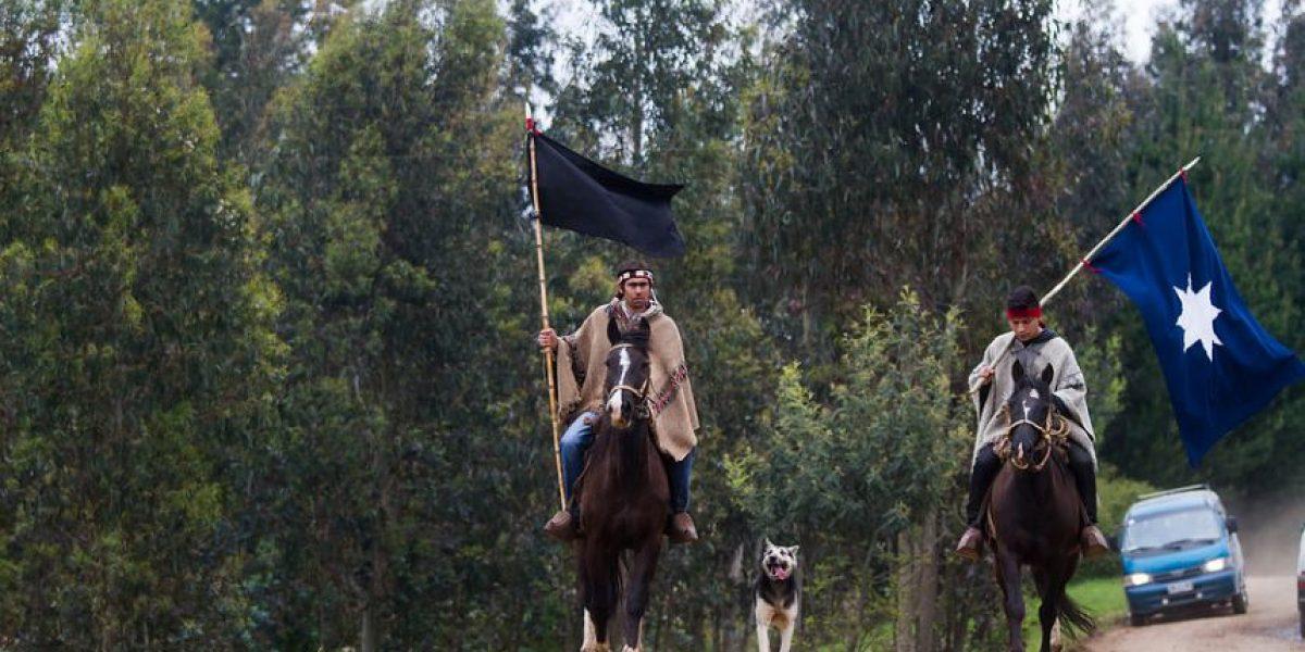Comuneros mapuche ingresaron al fundo El Hualle en Cañete