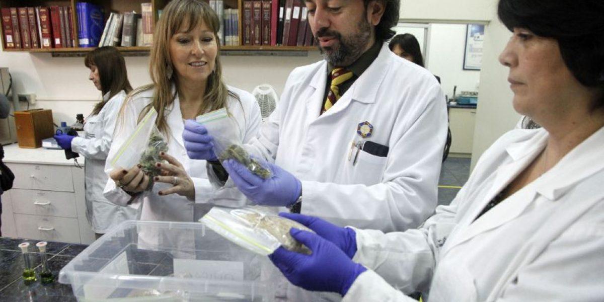 Universidad de Valparaíso da inicio a estudio fitoquímico de la marihuana